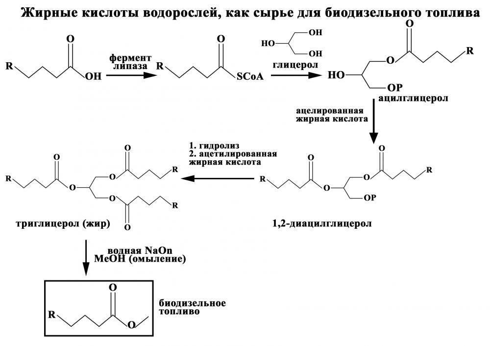 На схеме 1 показаны химические