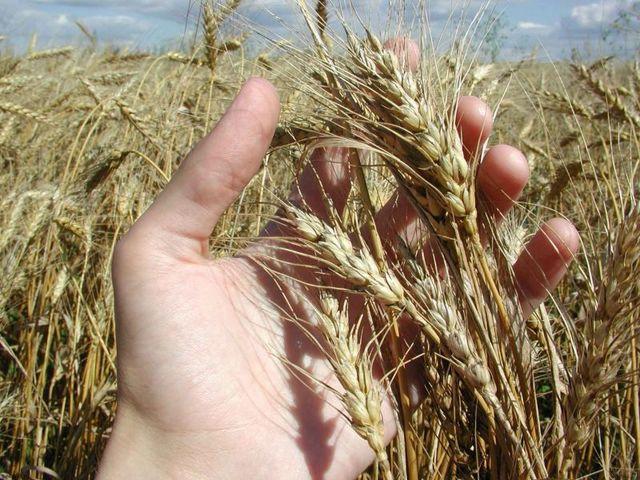 Экология в сельском хозяйстве реферат 9326
